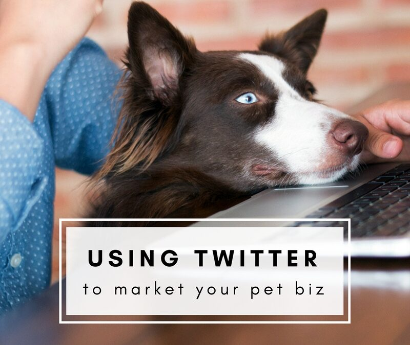 Using Twitter to Market Your Pet Business
