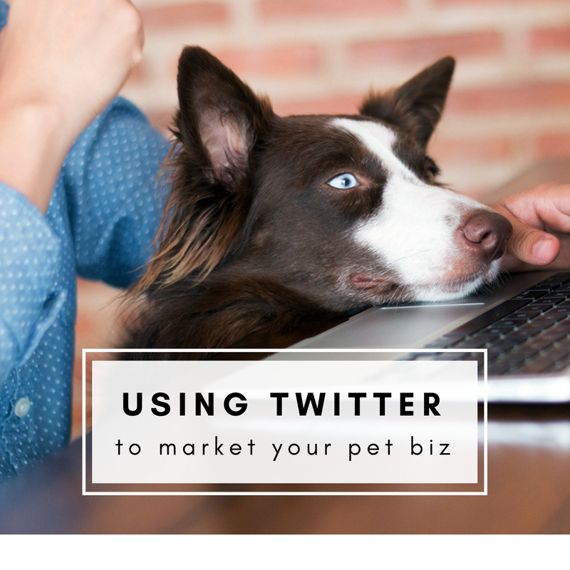 Using twitter to help your pet business