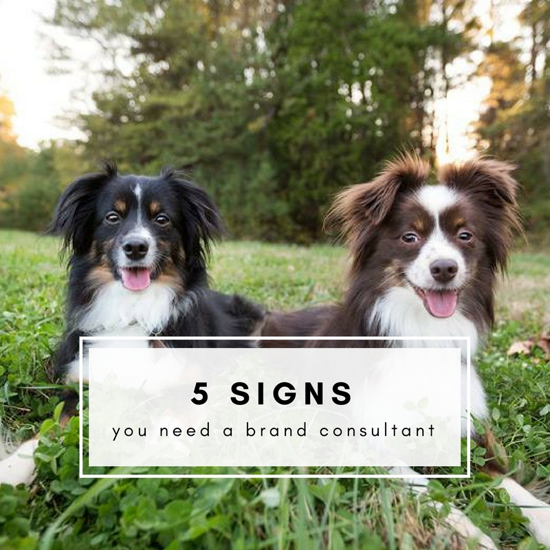 5 Signs Your Pet Business Could Benefit from Hiring a Brand Consultant
