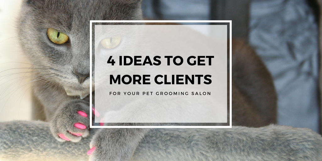 4 Ideas to Get More Clients for Your Dog Grooming Salon