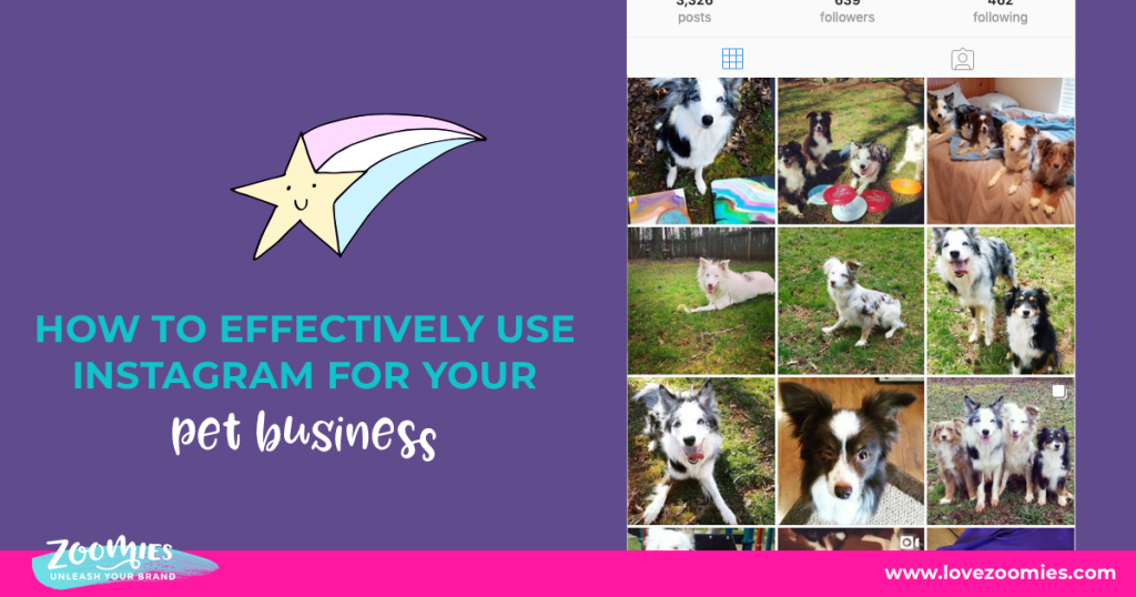 Make Your Pet Business Explode On Instagram 1
